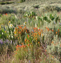 Sierra Wildflowers Photo Hikes